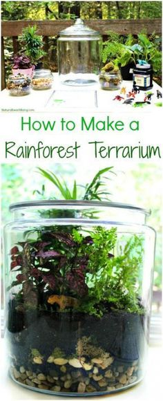 Rainforest Terrarium with Kids How to Make The Best Rainforest Terrarium with Kids, Learn about the Rainforest Animal Habitat, ecosystem, Water Cycle, Amazing Hands-on activity for kidsWith With or WITH may refer to: