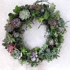 succulent wreath from dirt couture