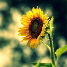 sunflowers...the happiest flower and my personal fave! Had them everywhere at my wedding!