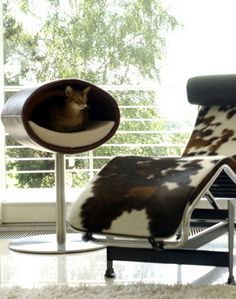 Ideas, Modern Fur Leather Lounge Chair Design Stainless Framed Beside The Modern Suspended Cat Bed Cage Oval Shaped Nice Cat Fence Veranda: Unique Pet Furniture for Domestic Pets Modern Cat Furniture, Pet Furniture, Furniture Design, Furniture Ideas, Cat Tree Designs, Cat Fence, Cat Cushion, Cat Stands, Cat Pillow