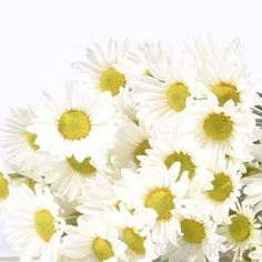 daisy poms for the flower girls to throw