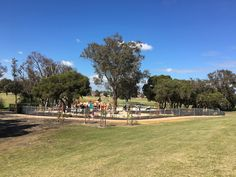 Warradale Park, Landsdale - Buggybuddys guide for families in Perth Open Water, Playgrounds, Car Parking, Perth, Places To Go, Dolores Park, Blog, Travel, Viajes