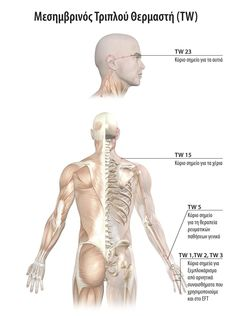 17-MES.TRIPLOU-THERMASTH-TW Massage Techniques, Kai, Anatomy, Health Fitness, Education, Teaching, Anatomy Reference, Health And Fitness, Onderwijs
