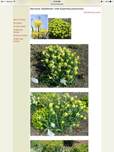Combine Spring Green, Tulips, Garden, Garten, Tulip, Gardens, Tuin, Yard