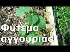 Φύτεμα αγγουριάς! - YouTube Planting Seeds, Plants, Garden Ideas, Youtube, Decor, Decoration, Seed Starting, Plant, Landscaping Ideas