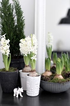Spring inspiration  Favorite fragrance! Should put them IN the house next year!