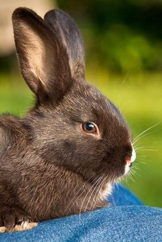 Captivating rabbit