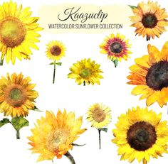 Check Out Watercolor Sunflower Collection By Kaazuclip On Creative Market