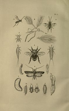 Various insects. Guide to the study of insects, and a treatise on those injurious and beneficial to crops Salem,Naturalist's agency,1868- Biodiversitylibrary. Biodivlibrary. BHL. Biodiversity Heritage Library