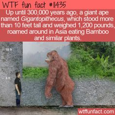 Weird History Facts, Wierd Facts, Unusual Facts, Wtf Fun Facts, True Facts, Funny Facts, Funny Memes, Fun Facts About Animals, Animal Facts