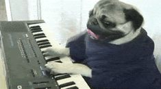 Keyboard Pug GIF LOL #pugs