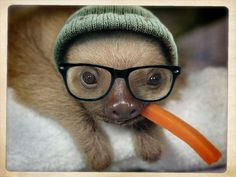 hipster sloth only eats local, organic carrots.