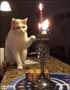 cat candle hanukkah jewish menorah