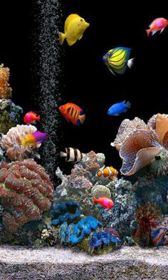 We can offer you many species of live aquarium plants. You will be able to design and create your own unique aquarium world filled with green plants. You can arrange with them beautiful aquascape. Marine Fish Tanks, Marine Aquarium, Live Aquarium, Saltwater Aquarium Fish, Saltwater Tank, Freshwater Aquarium, Tropical Fish Aquarium, Tropical Fish Tanks, Fauna Marina