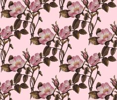 Charlotte Bronte's Wild Roses  fabric by peacoquettedesigns on Spoonflower - custom fabric