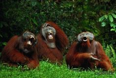 Laughing animals, part 2 (25 pics)