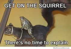 Funny pictures about Get on the squirrel! Oh, and cool pics about Get on the squirrel! Also, Get on the squirrel! Funny Animal Pictures, Funny Photos, Funny Animals, Cute Animals, Baby Animals, Thats The Way, Animal Memes, Animal Humor, Animal Captions