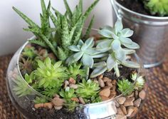 Indoor Succulent Garden, I want  a mini terrarium in my room like this