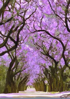 Jacaranda tree prints, SAVE15% CODE:SAVE15, print, lavender decor, Giclee Print of trees, Canvas print, Gallery Wrap Canvas, canvas art