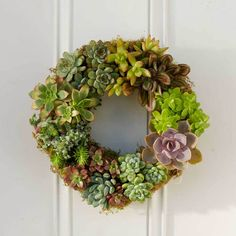 Succulent Wreath - VivaTerra