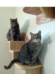 Cats love to climb, whether it's up on a shelf or on a staircase. These shelves and staircases are out of the way, so they take up little space, and when cats lounge above, they become part of the decor. Courtesy of the Vertical Cat
