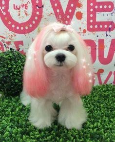 Cute Puppies, Dogs And Puppies, Dog Dye, Asian Dogs, Animals And Pets, Cute Animals, Creative Grooming, Dog Haircuts, Dog Daycare