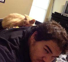 """Cat - """"you put your head upon the bed, then I sleep, you sleep, we sleep"""""""