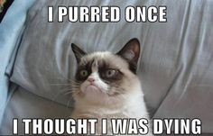 Humor cats ...For more cat memes and lolcats visit www.bestfunnyjokes4u.com/lol-funny-cat-pic/