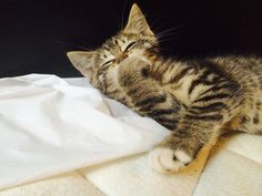Awesome Aww.. Meow.. Cats of Love Photos (82) Check more at http://dougleschan.com/the-recruitment-guru/uncategorized/aww-meow-cats-of-love-photos-82/
