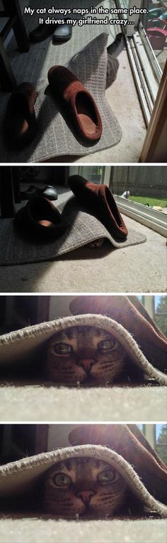 Funny Animal Pictures Of The Day - 26 Pics | That's a good way to get stepped on kitty.