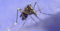 City to Fine Residents Over Puddles of Water in Response to Zika.  Zika has been shown as a fraud.  The chemicals used were the cause of the birth defects.  Another way to milk the public.