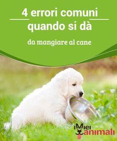 4 errori comuni quando si dà da mangiare al cane Migliorare #l'alimentazione del #cane è possibile. Scoprite in questo articolo gli #errori più frequenti che si commettono quando si dà da #mangiare al cane. #Alimentazione