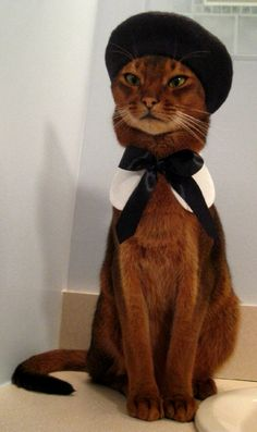 Picture of Toki, a Abyssinian cat on Catster