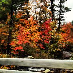 Mine © New England Fall
