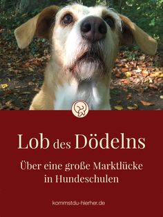 Praise of the Dödelns - Dog Training Raining Cats And Dogs, All Dogs, Best Dogs, Weimaraner, Vizsla, Lob, Dog Names, Dog Love, Animals And Pets