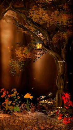 Fairies at night...