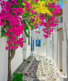 Paros Island - Greece ✨🌺🌺🌺✨ Picture by ✨✨ . for a feature 🌺 Beautiful World, Beautiful Gardens, Beautiful Flowers, Wonderful Places, Beautiful Places, Beautiful Pictures, Paros Island, Greece Travel, Greece Vacation