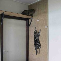 Check this out: Climbing wall for cats. https://re.dwnld.me/2cbRS-climbing-wall-for-cats