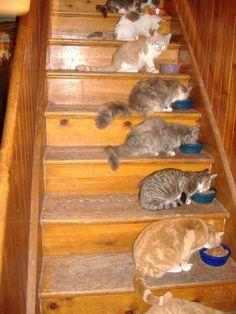 Nom Nom Nom Cats :)