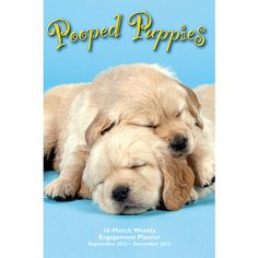 Pooped Puppies Engagement Calendar: This best-selling calendar in a popular 16-month engagement format! Pooped Puppies is a calendar guaranteed to melt the heart of even the grimmest Cruella de Vil.  $15.99  http://calendars.com/Puppies/Pooped-Puppies-2013-Softcover-Engagement-Calendar/prod201300002189/?categoryId=cat00339=cat00339#
