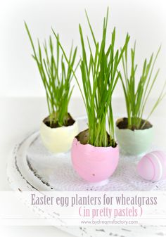 Use natural eggshells to create beautiful Easter egg planters, paint them in pretty pastels and grow wheatgrass or flowers for your Easter decor - Dreams Factory
