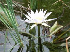Flowers Flowers, Plants, Photography, Animals, Photograph, Animales, Animaux, Florals, Fotografie