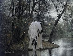 Mystical forest Gypsy horse ...imagine a ace where we might walk freely with nature and admire her beauty....