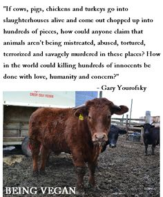 """""""How in the world could killing hundred of innocents be done with love, humanity and concern?"""""""