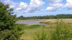 Finden Sie Erholung in schönster Natur - Boddenlandschaft nur wenige Minuten von unseren Ferienhäusern entfernt.