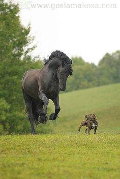 My two fav creatures. Horse and dog