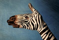 Crazy hand painting zebra..