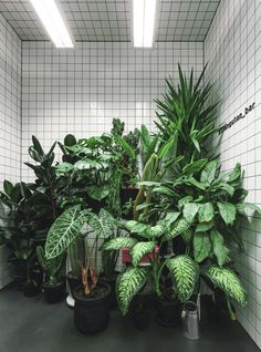 Urban Jungle meets Futuristic Grids at Orang+Utan Vegetarian Bar in Kiev, Ukraine Orang Utan, Plant Aesthetic, Aesthetic Design, Aesthetic Roses, Nature Aesthetic, Decoration Plante, Plants Quotes, Plants Are Friends, Green Plants