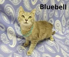 NC: 'Due to some negative feedback regarding a particular rescue, the shelter does not feel confident in posting cats any longer' Animal Shelters, June, Community, Facebook, Feelings, Friends, Cats, Photos, Animals