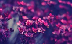 #flowers #purple #pink #blue